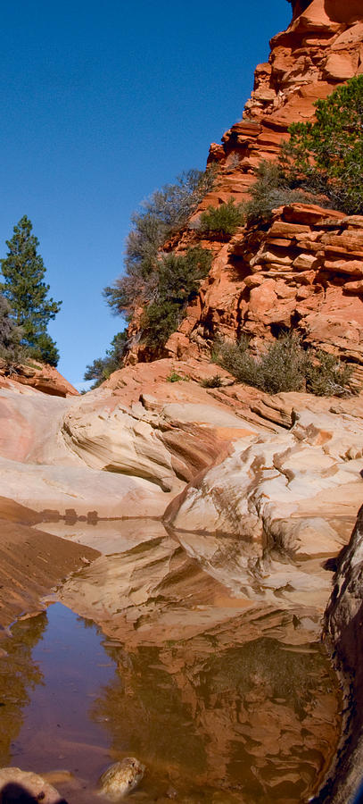 Zion Utah Sandstone national Park water Hole Waterpocket Reflections Spruce red Rock Slickrock Photograph - Zion Plateau Water Hole by Edwin Voorhees