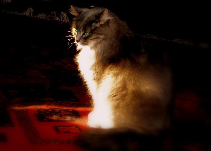 Light Photograph - Zusje Sunbathing In The Light by Martin Morehead