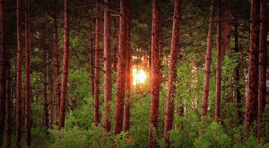 010 - Pine Sunset by David Ralph Johnson