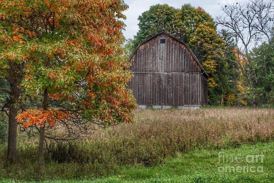 0695 - Mt Morris Road Grey in Fall by Sheryl L Sutter