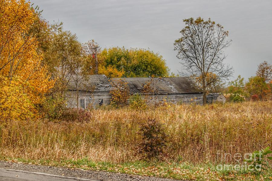 0711 - Hill Road's Roadside Greys I by Sheryl L Sutter