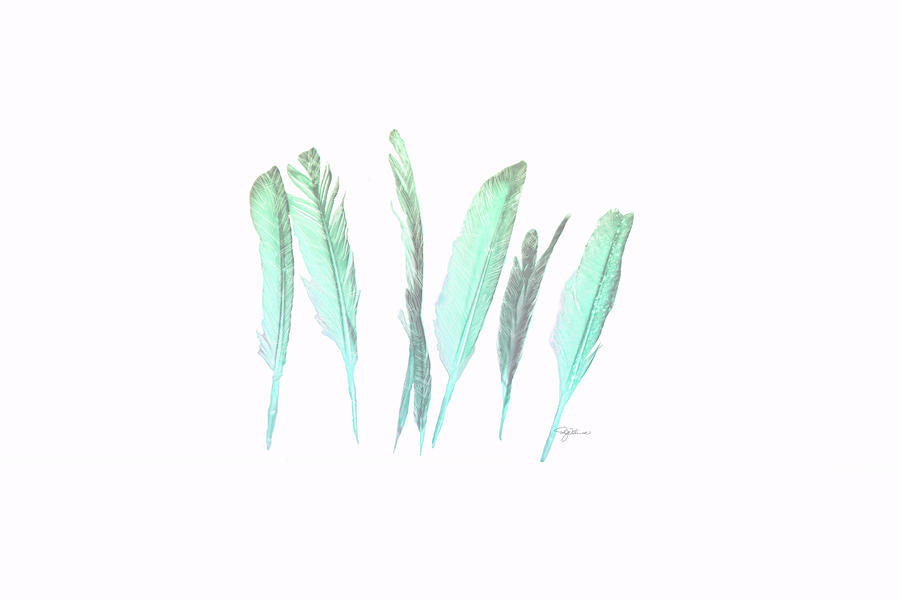 11076 Feathers Photograph