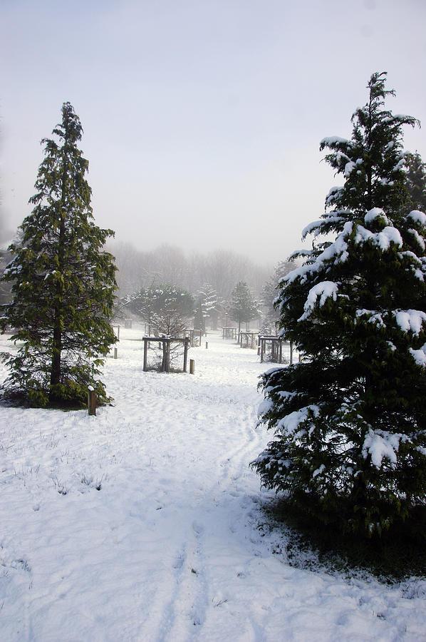 30/01/19  RIVINGTON. Memorial Arboretum. by Lachlan Main