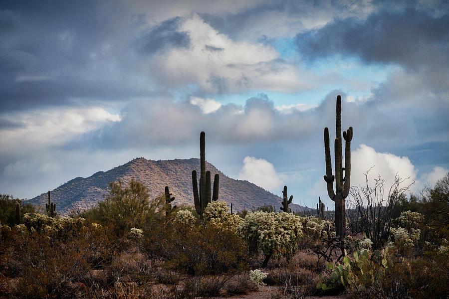 A Beautiful Desert Day  by Saija Lehtonen