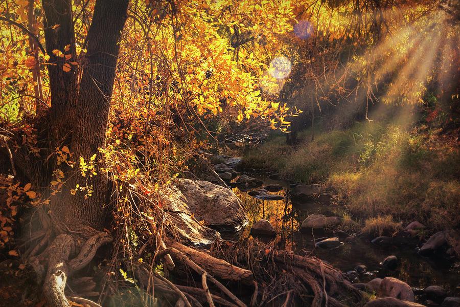 A Golden Autumn Morning  by Saija Lehtonen