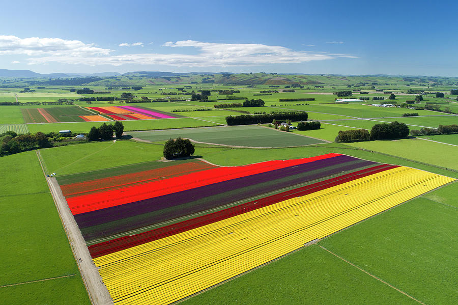 Aerial Photograph - Aerial Of Colorful Tulip Fields by David Wall