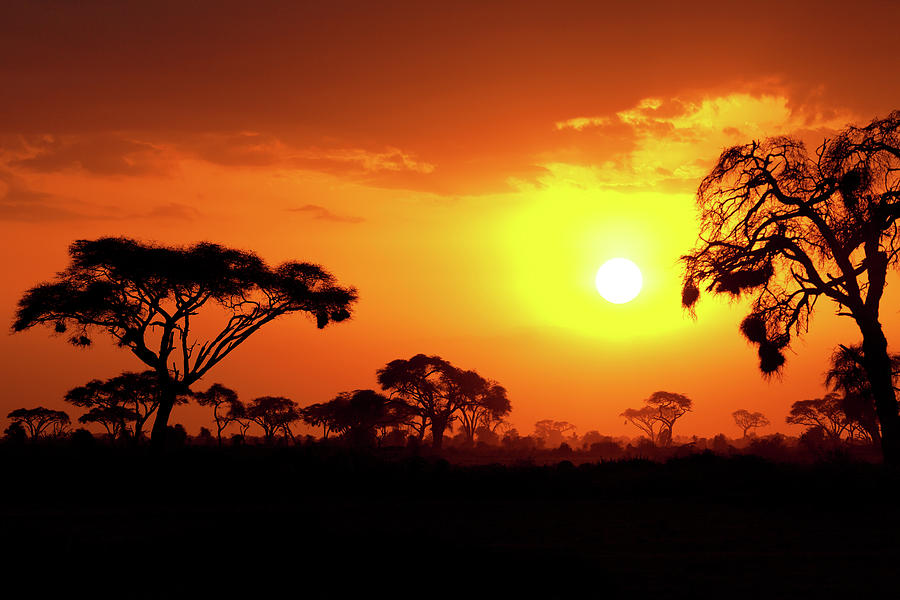 African Sunset Photograph by Ivanmateev