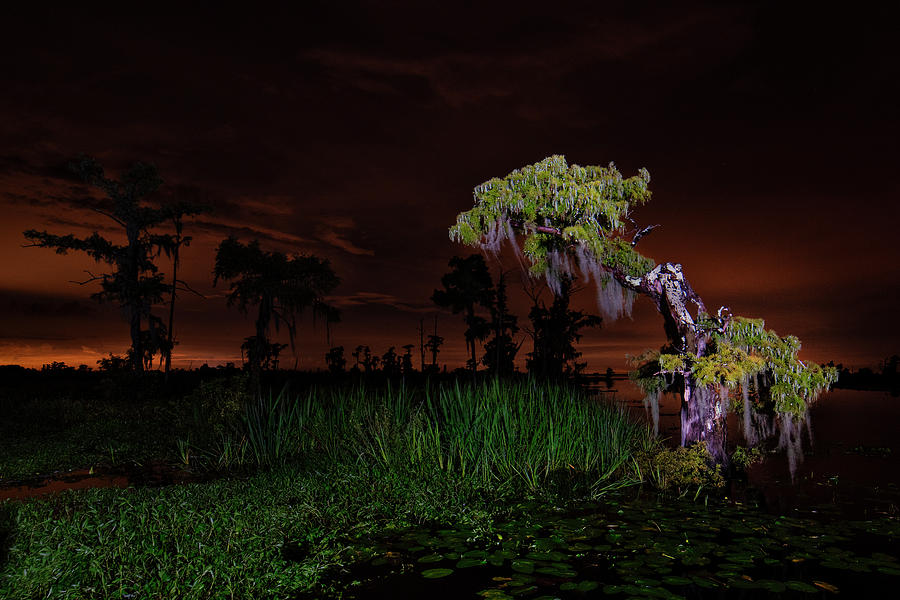 Along the bayou by Andy Crawford
