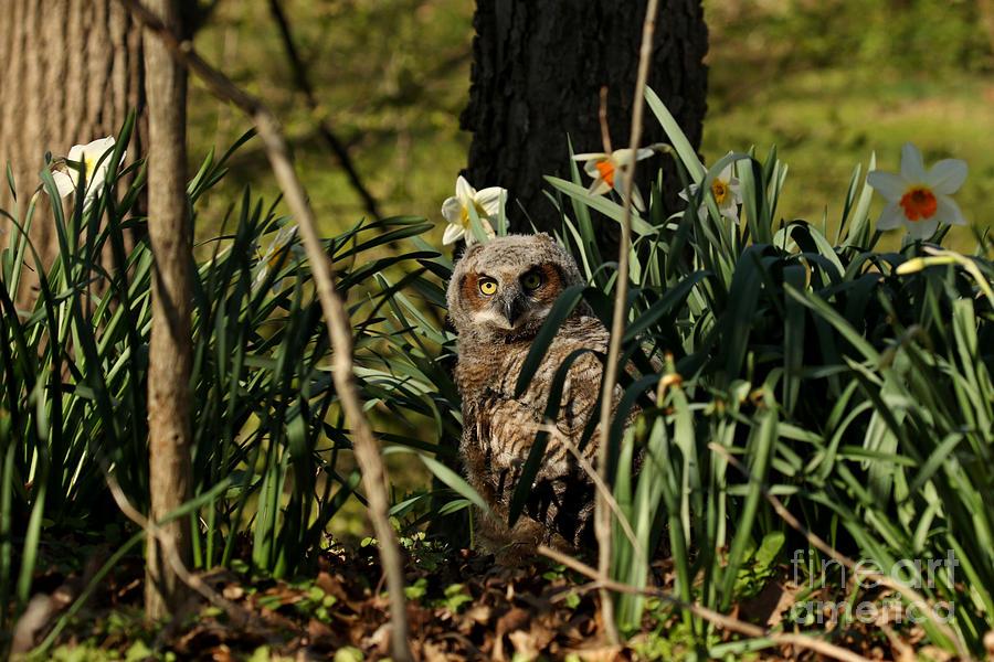 Among The Daffodils Photograph