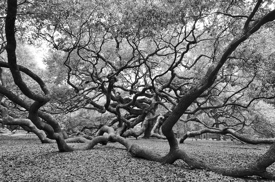 Angel Oak by Blaine Owens Photography
