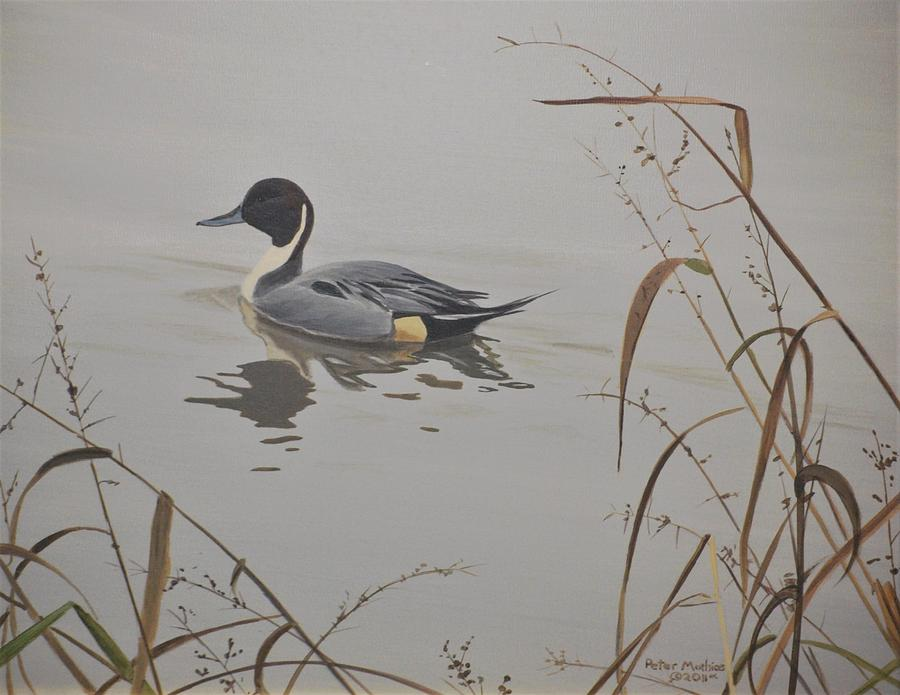 Ankeny Pintail by Peter Mathios