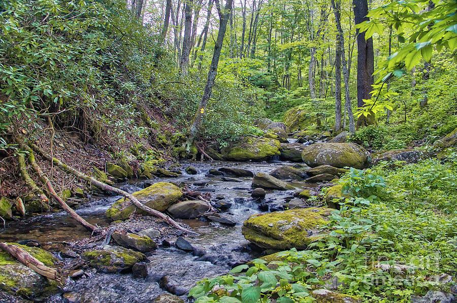 Appalachian Photograph - Appalachian Stream by James Foshee