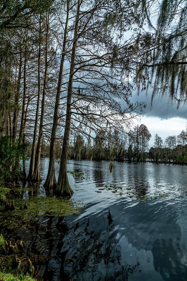 Water Photograph - Around The Park by Ric Schafer
