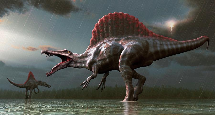 Artwork Of A Spinosaurus Dinosaur Digital Art by Mark Garlick