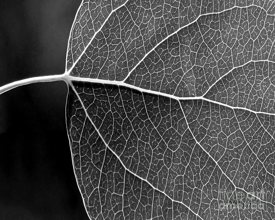 Aspen Leaf Veins by Natalie Dowty