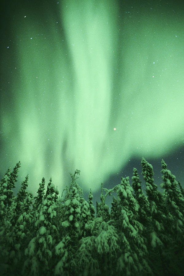 Aurora Borealis Northern Lights Over Photograph by Kevin Schafer