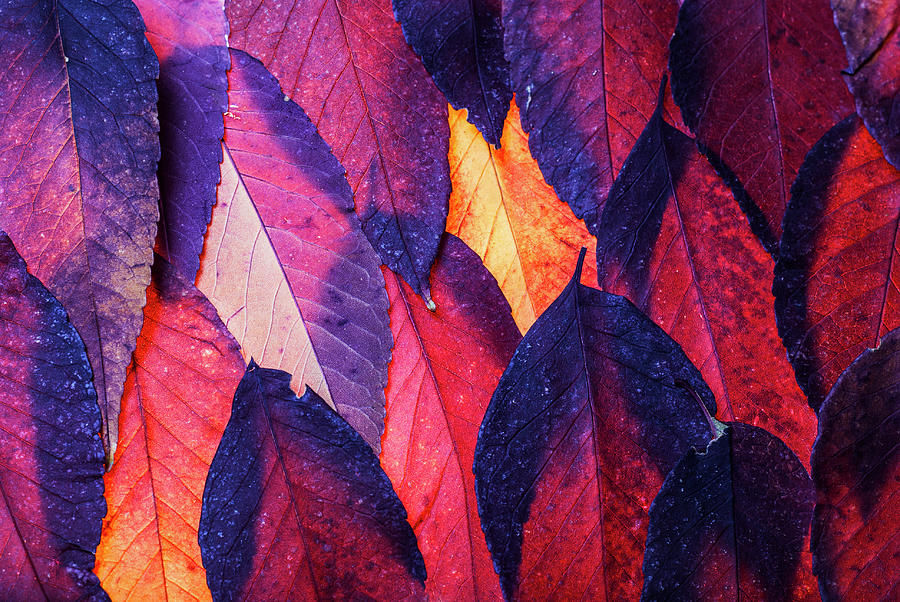 Autumn abstract by Vishwanath Bhat