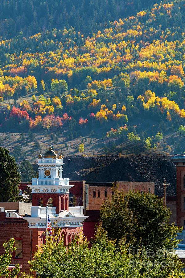 Autumn Aspen Leaves Of Victor Colorado Photograph