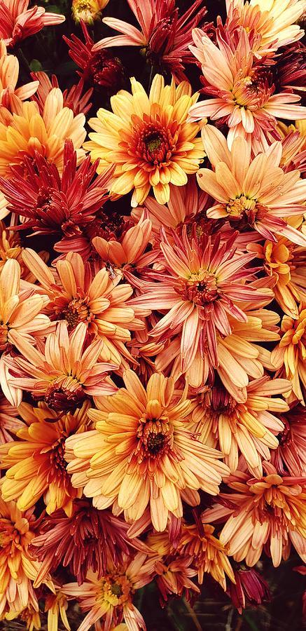 Autumn Colors  by Karen Harrison