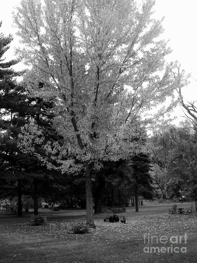 Autumn in Black and White by Frank J Casella
