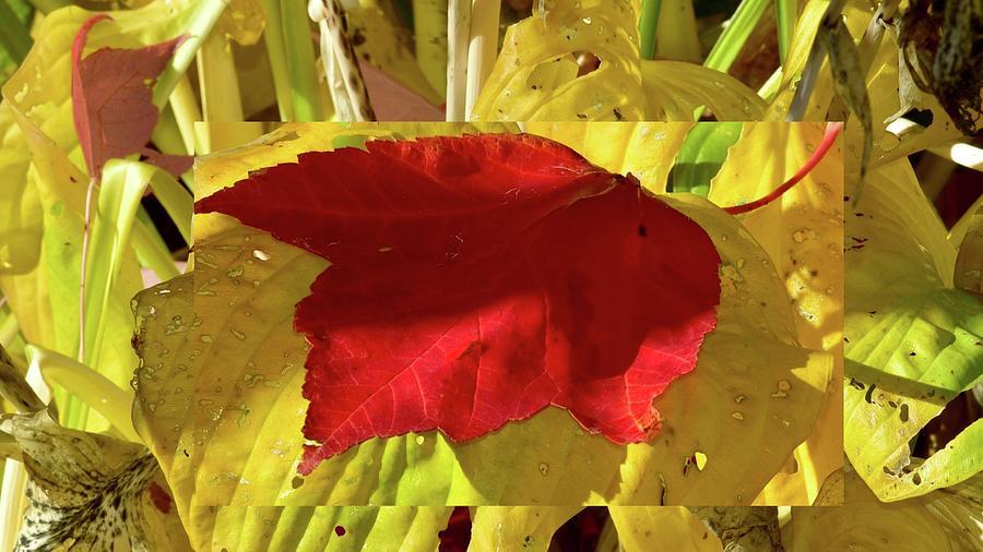 Autumn Leaf Collage Photograph