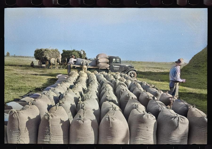 Bags Of Threshed Rice In The Foreground, With Loading Operations In Middleground, Crowley, Louisiana Painting