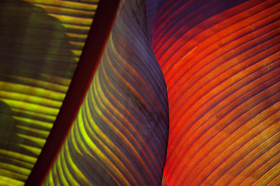 Banana Leaf 8602 by Mark Shoolery
