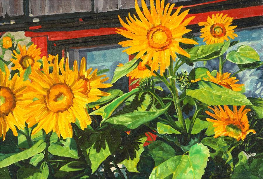 Barnyard Sunflowers by Phil Chadwick