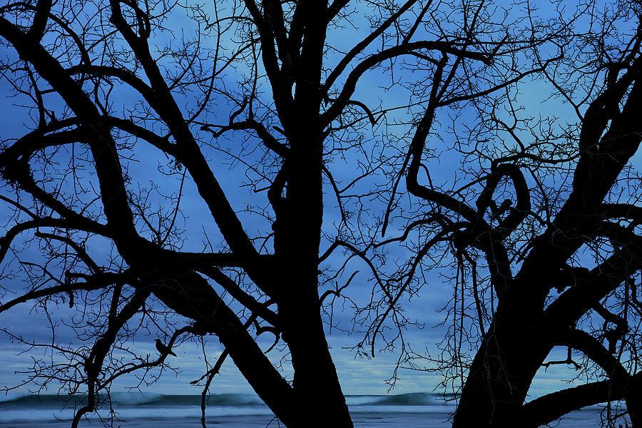 Beach Photograph - Beach Tree by John Rodrigues