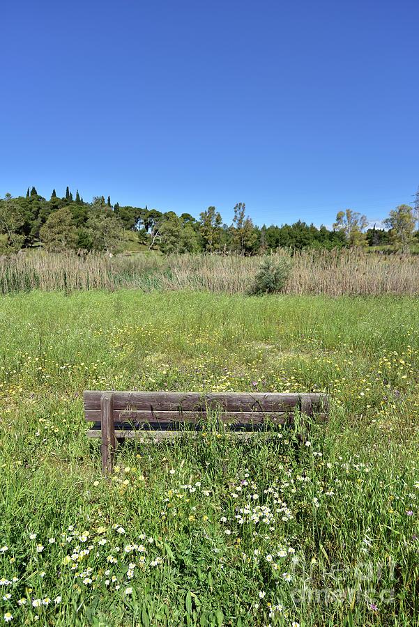 Bench among wild flowers II by George Atsametakis