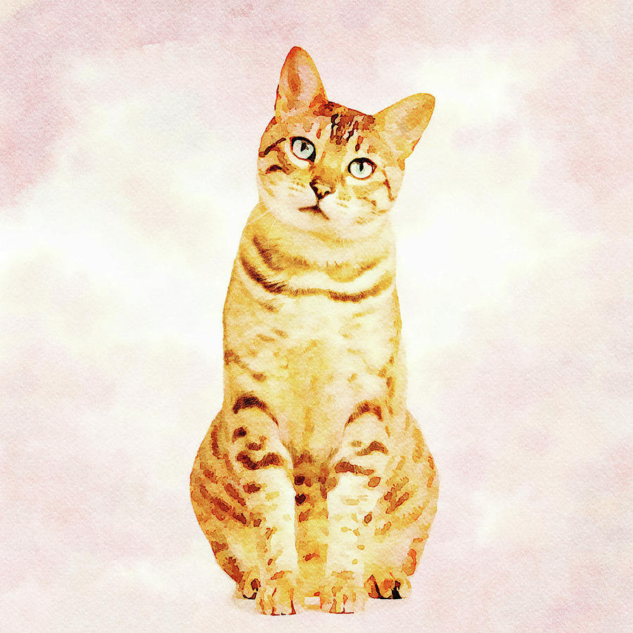 Bengal kitten looking very sad and facing the viewer in a digita by Steven Heap