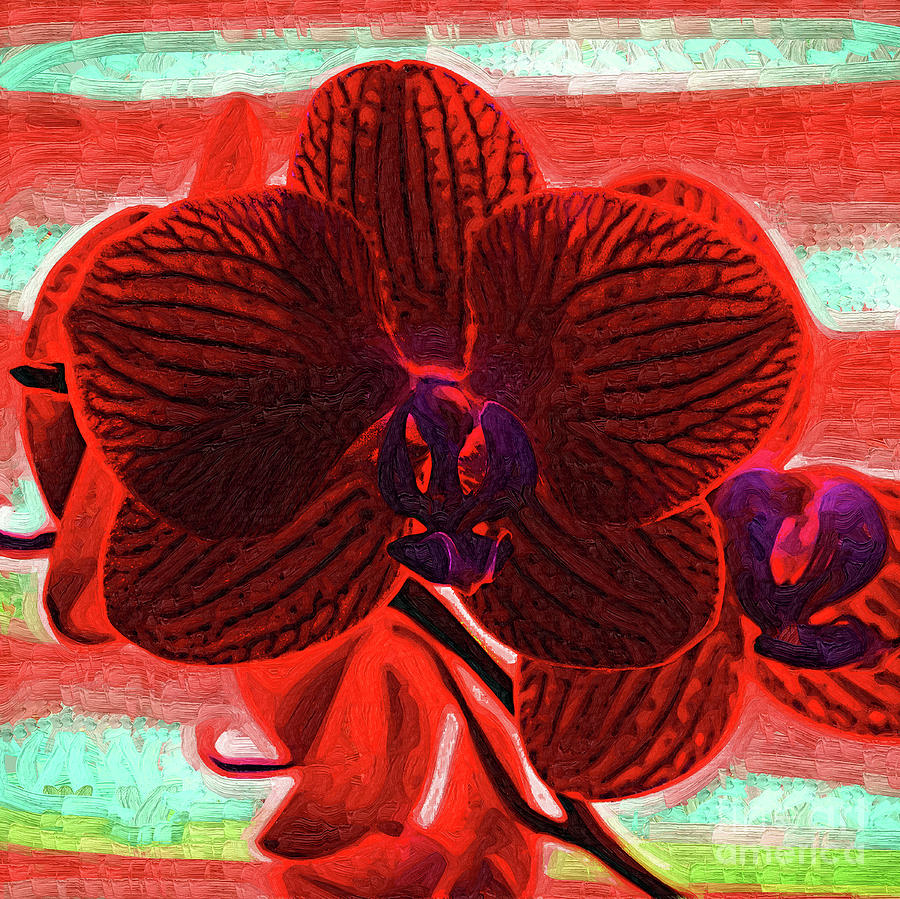 Blood Red Orchid by Kirt Tisdale