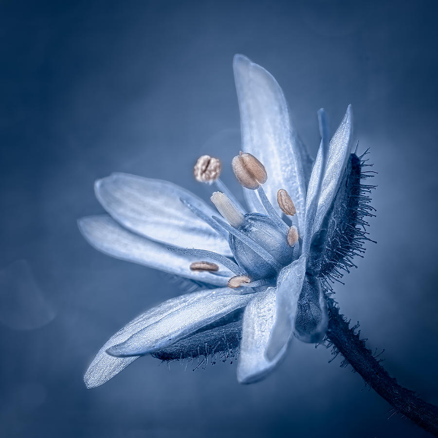 Bokeh Photograph - Blue Mood II by Yves Gauvreau