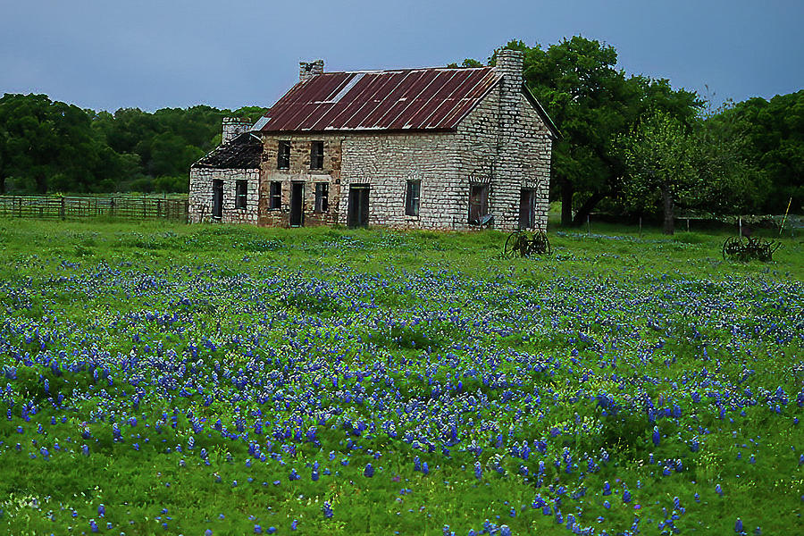 Bluebonnet House by Peggy Blackwell