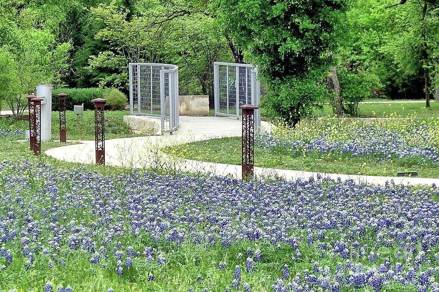 Bluebonnets in Round Rock, Texas by Janette Boyd