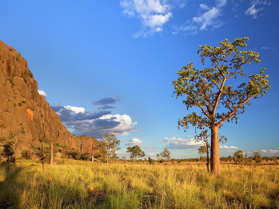 Boab Trees At The Windjana Gorge Photograph by Sara winter
