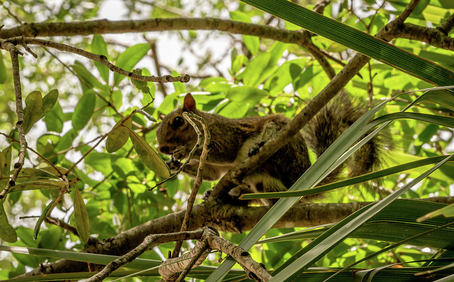 Animals Photograph - Branch To Branch by Ric Schafer