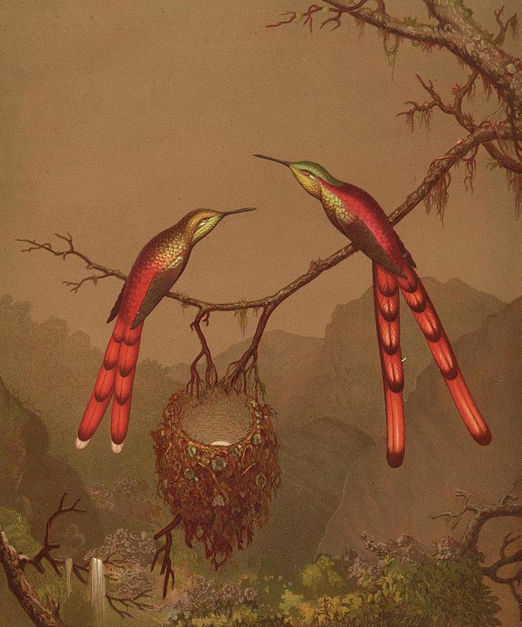 Humming Painting - Brazilian Hummingbirds by Martin Johnson Heade