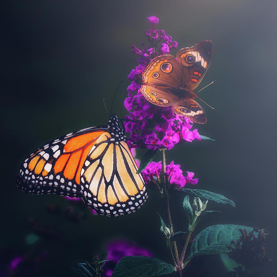 Butterflies  by Allin Sorenson