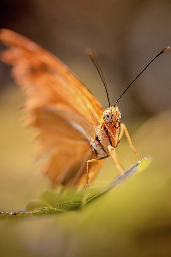 Butterfly Moth by John Randazzo