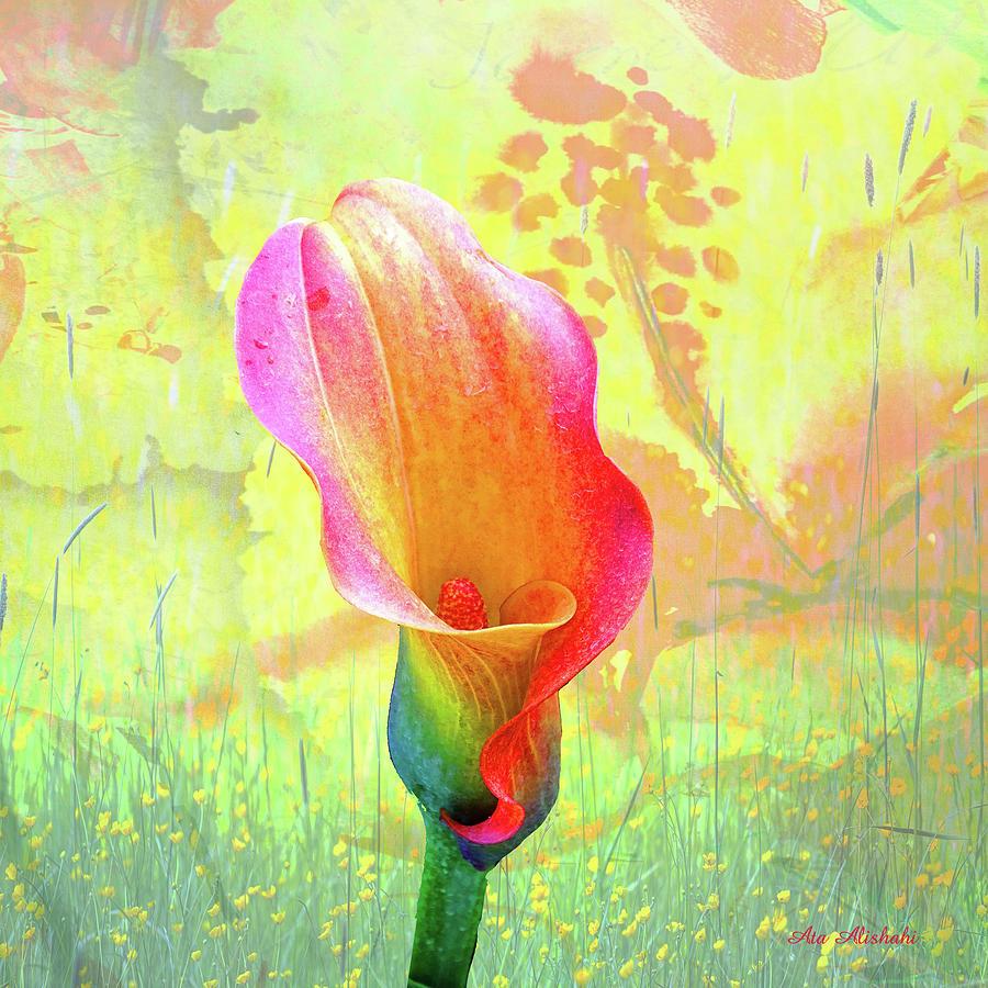 Calla Lily Mixed Media - Calla Lily by Ata Alishahi
