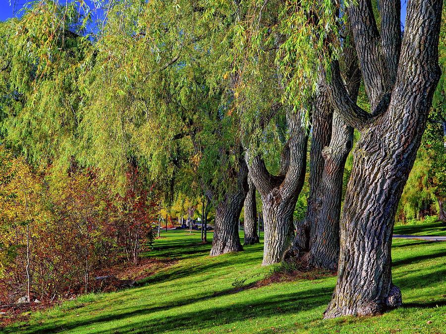 Canadian Autumn by Anthony Dezenzio
