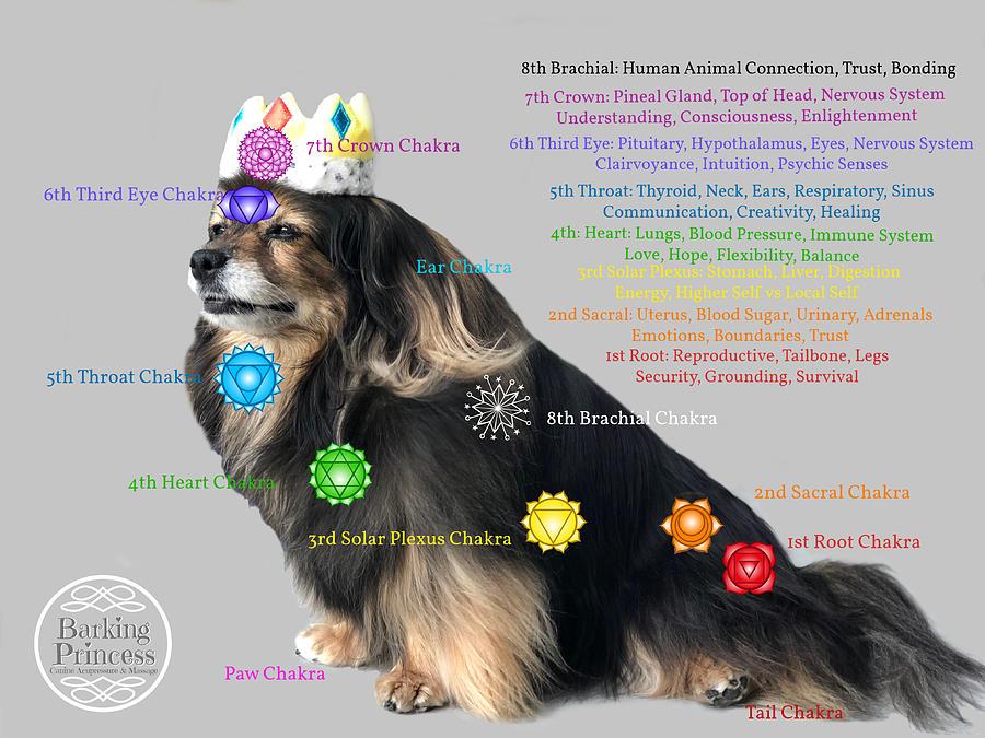 Crown Chakra Digital Art - Canine Chakras by Barking Princess