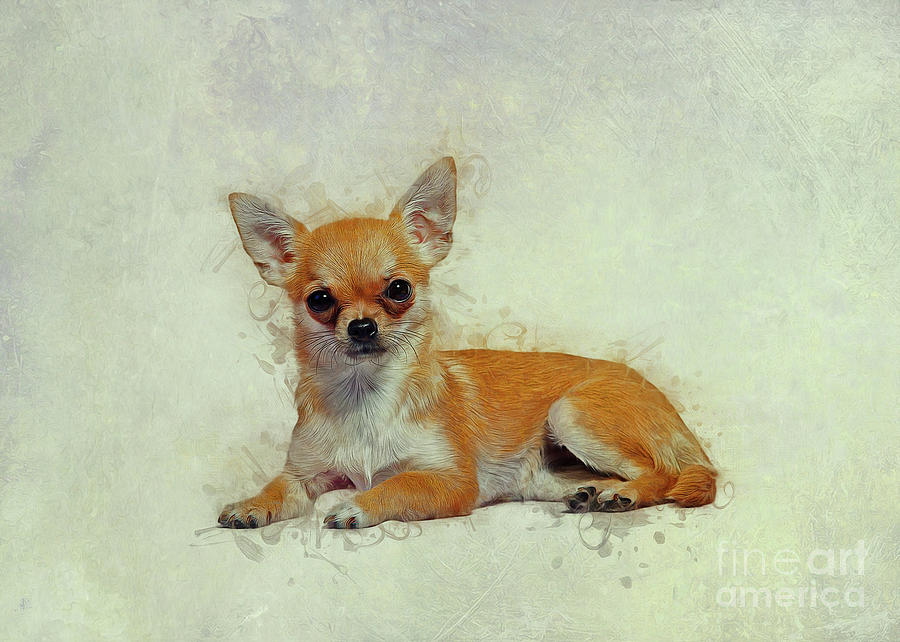 Chihuahua Art by Ian Mitchell