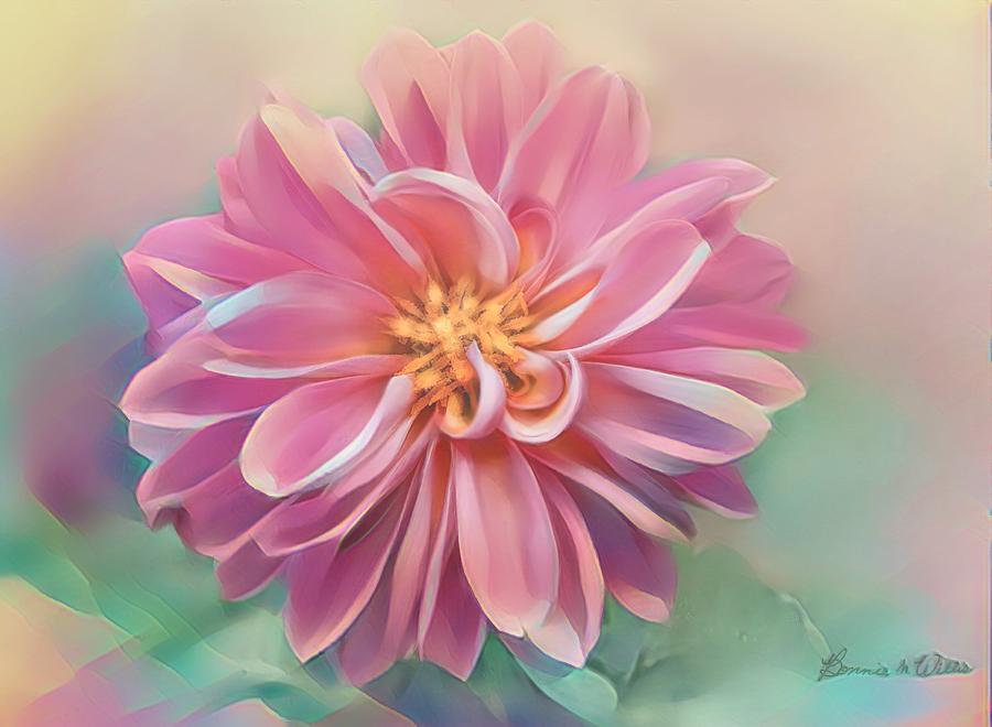 Chrysanthemum by Bonnie Willis