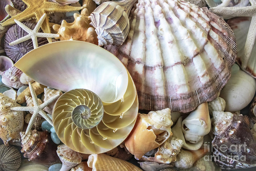 Collecting Shells by Colleen Kammerer