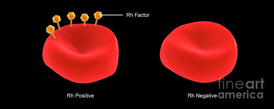 Conceptual illustration of Rh factor on a red blood cell. by Stocktrek Images