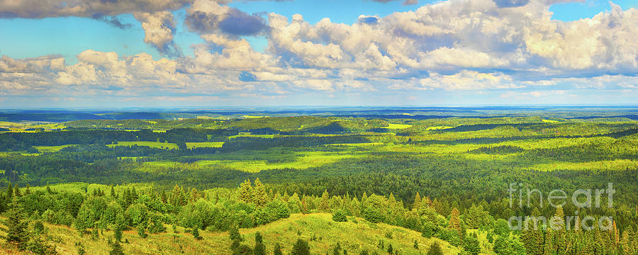 Coniferous Forest And Meadows. Panorama Photograph