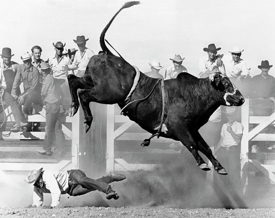 Cowboy Riding A Bull Photograph by Underwood Archives