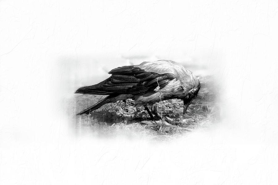 Crow... by Aleksandrs Drozdovs